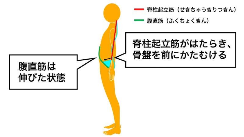 骨盤の位置と筋肉の関係