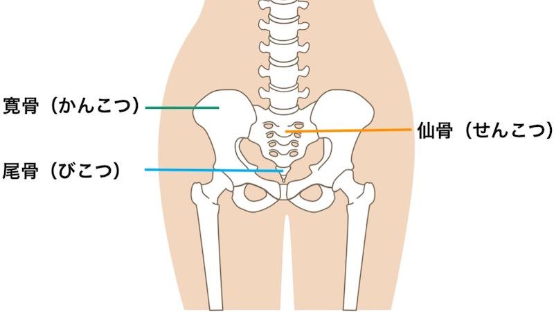 骨盤の解剖学