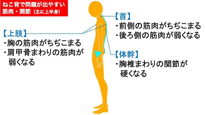 ねこ背で問題が出やすい筋肉・関節