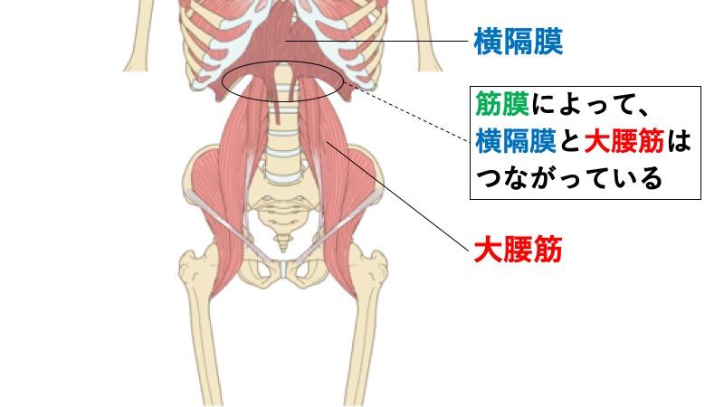 横隔膜と大腰筋