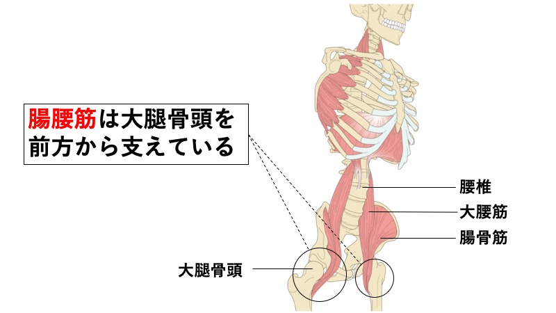 腸腰筋の股関節前方支持