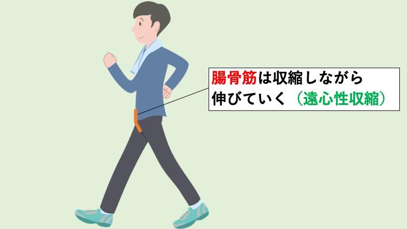 腸骨筋の遠心性収縮