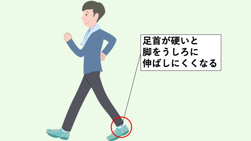 足首と歩行の関係