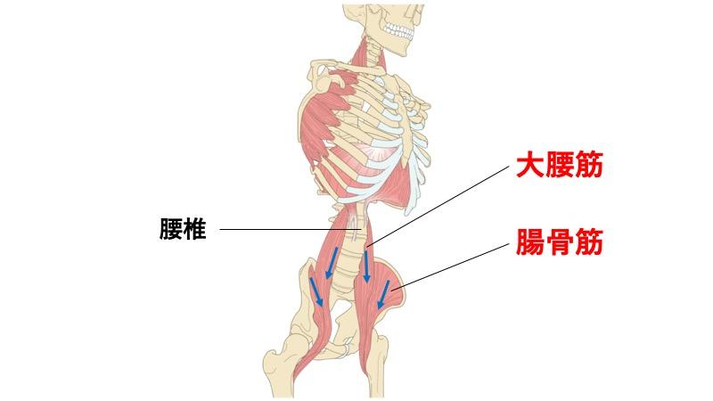 骨盤前傾の筋肉