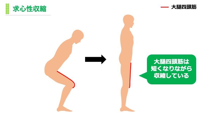 大腿四頭筋の求心性収縮