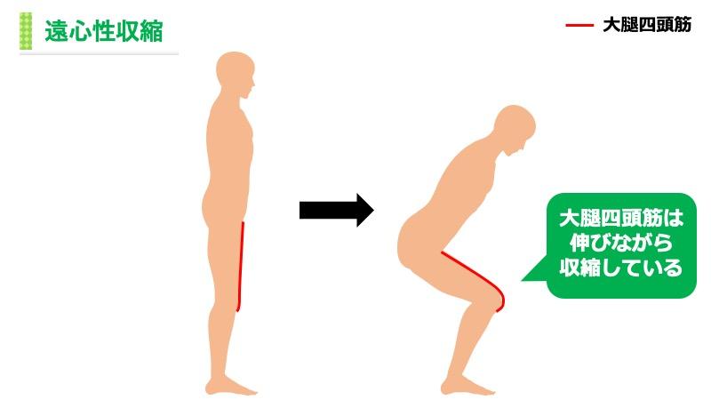 大腿四頭筋の遠心性収縮